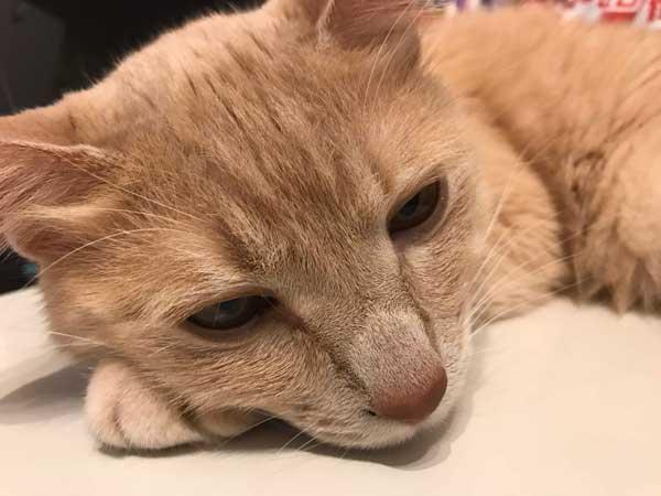 猫はだいたい眠い