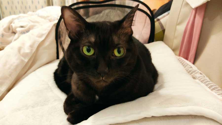 実食レビュー ロイヤルカナン 療法食 消化器サポート  便秘の猫ちゃん必見!